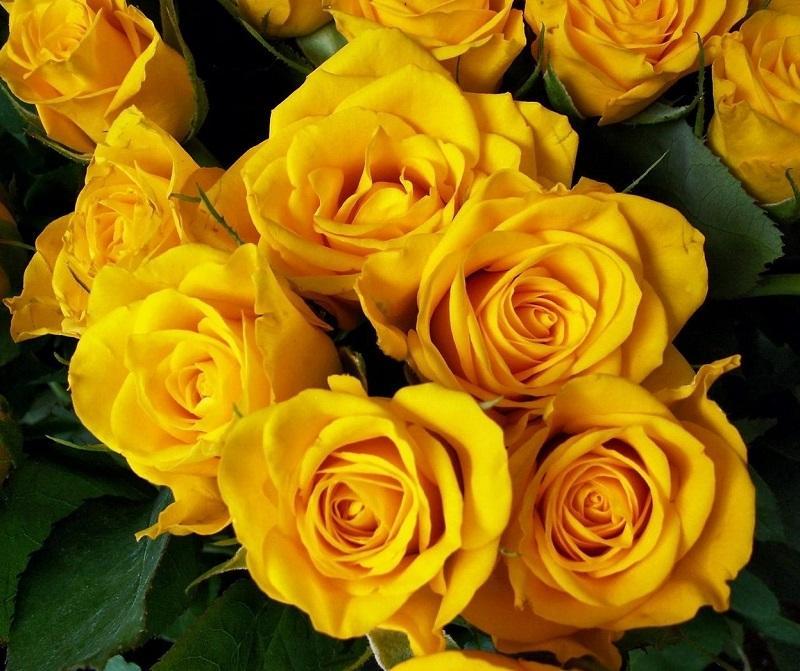 img_cual_es_el_significado_de_las_rosas_amarillas_26205_orig
